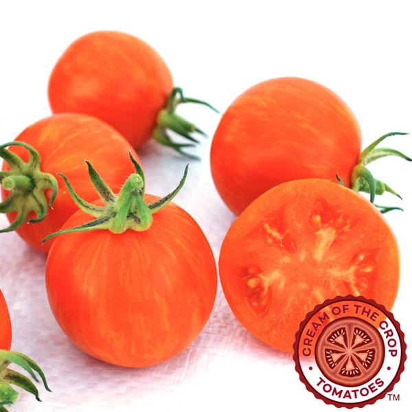 Tomato 'Apricot Zebra' Cream of the Crop Cherry Tomato