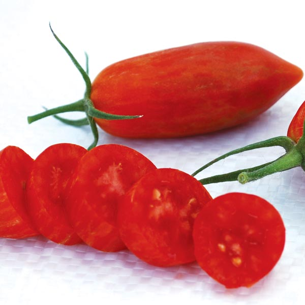Tomato 'Prairie Fire' Cream of the Crop Julienne Cherry Tomato