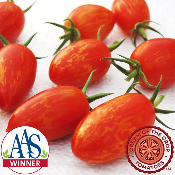 Tomato 'Red Torch F1' Cream of the Crop Julienne Cherry Tomato