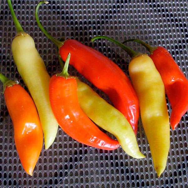 Pepper (Hot) 'Aji Crystal'