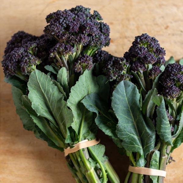 Broccoli 'Burgundy'