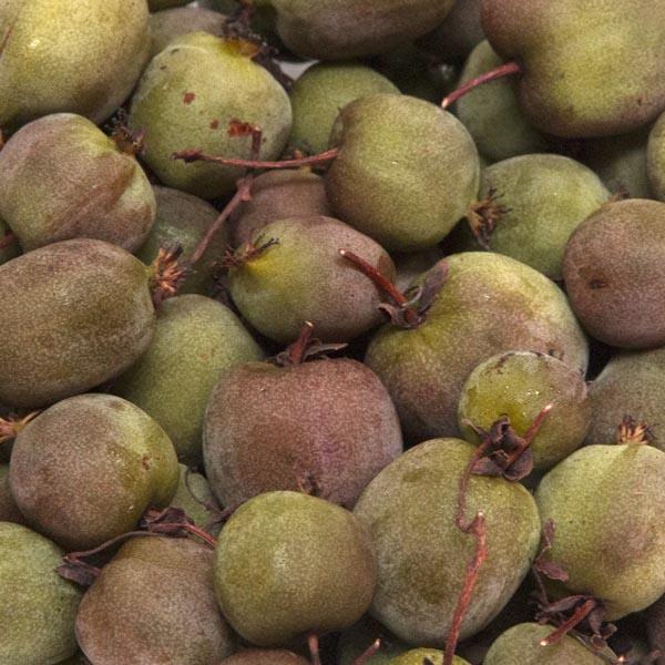 Kiwi arguta 'Prolific' (self-fertilizing)