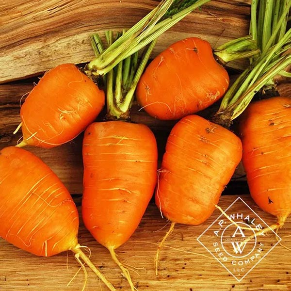 Carrot 'Oxheart'