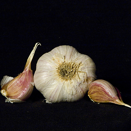 Garlic 'Chesnok Red' Purple Stripe Hardneck