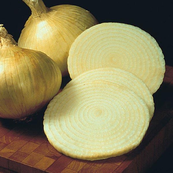 Onion 'Yellow Granex'