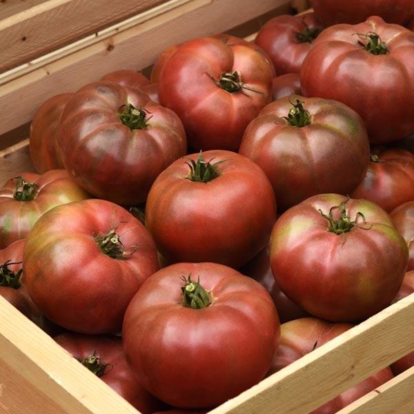 Tomato 'Darkstar' F1 beefsteak