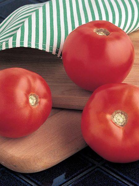 Tomato 'Mountain Spring' Slicing Tomato