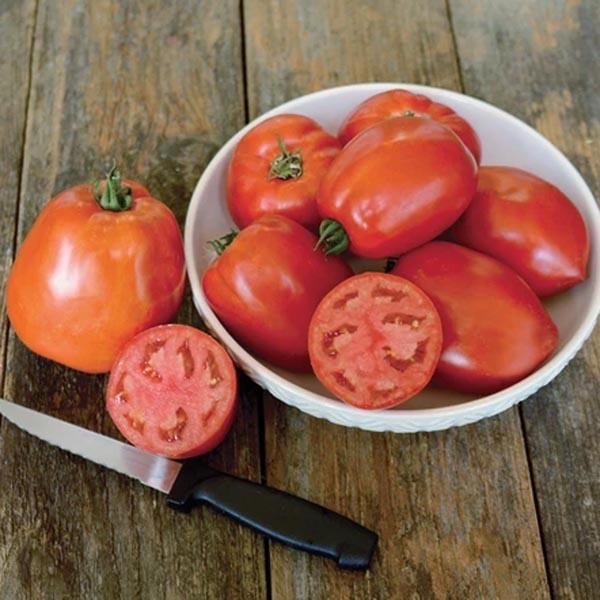 Tomato 'Oregon Star' sauce tomato