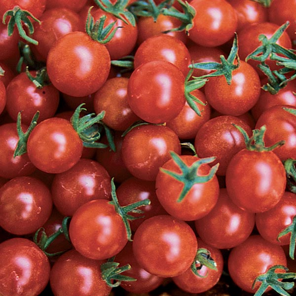 Tomato 'Red Currant'