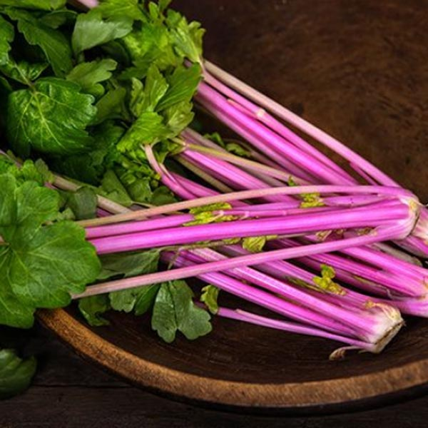 Celery 'Chinese Pink'