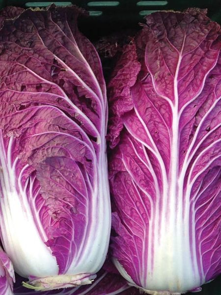 Cabbage 'Scarrossa'