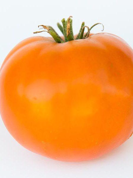 Heirloom Tomato 'Thorburn's Terra Cotta'