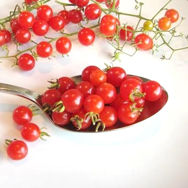 Tomato 'Spoon' Cherry Tomato