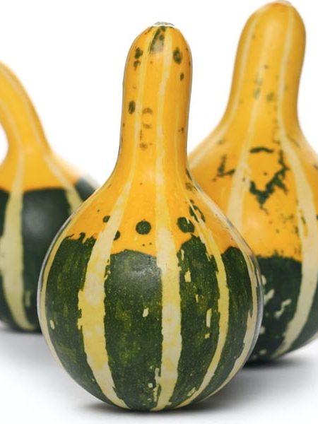Gourd 'Pear Bicolor'