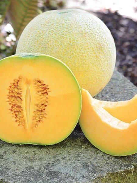 Melon 'Divergent' Cantaloupe