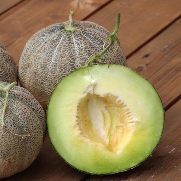 Melon 'Montreal'