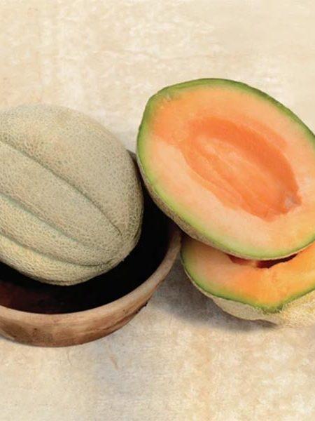 Heirloom Melon 'Oregon Delicious'