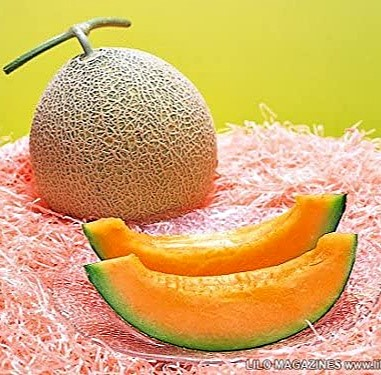 Melon 'Yubari King'