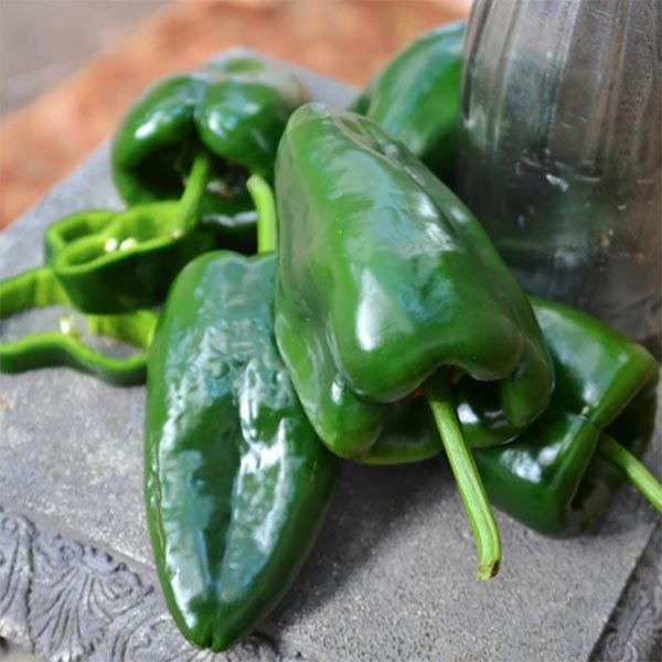 Pepper (Hot) 'Caballero'