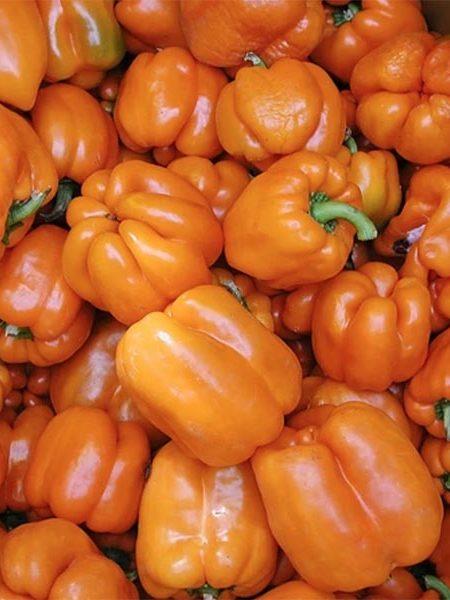 Pepper (Sweet) 'Gourmet'