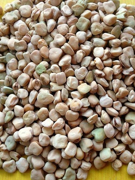 Suitcase Seeds Bean 'Cicerchia'