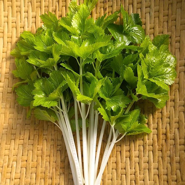 Chefs' Favorites Cutting Celery 'White Queen'