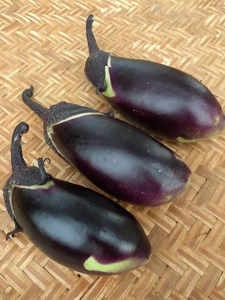 Suitcase Seeds Eggplant 'Shimoda'