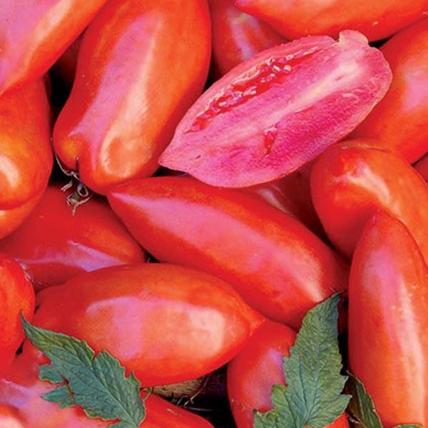 Heirloom Tomato 'Opalka'