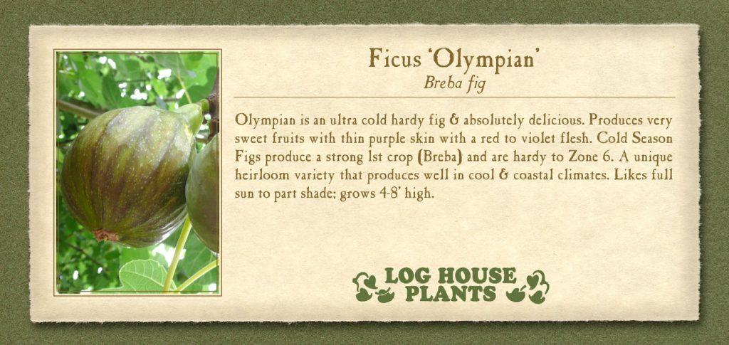 Fig Olympian