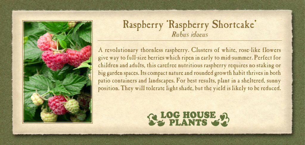 Raspberry RaspberryShortcake