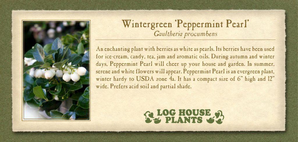 Wintergreen Peppermint Pearl