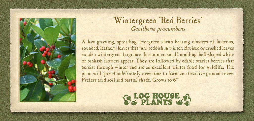 Wintergreen-RedBerries