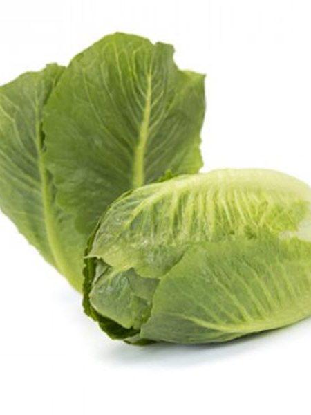 Lettuce 'Tendita' Eat The Spoon Lettuce