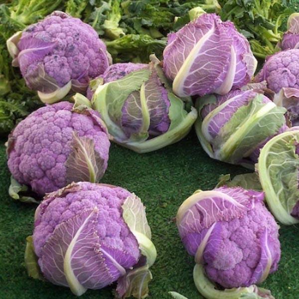 Cauliflower 'Purple Cape'