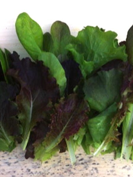 Lettuce 'Winter Mix'