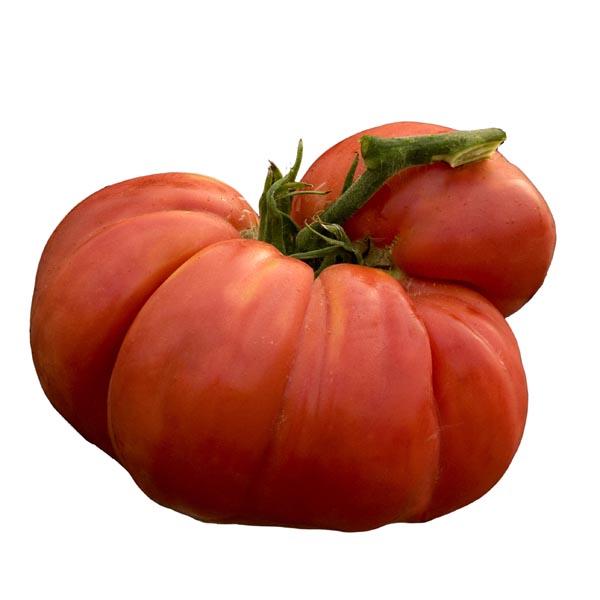 Tomato 'Big Zac' Grafted